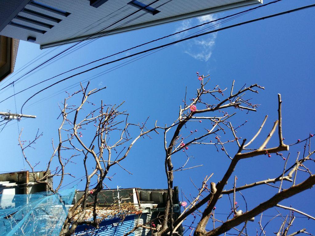 さわやかな空とかわいい梅