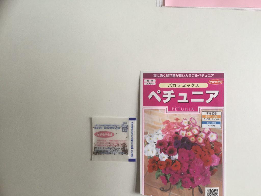 リフォーム東京 花壇 ペチュニア